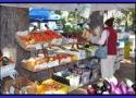 Truckee\'s farmer\'s market